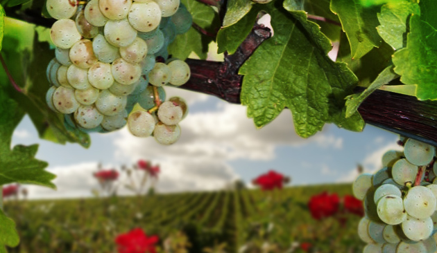 Vitigno Sauvignon Blanc
