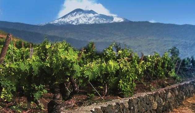 Viticoltura sull'Etna e nelle Eolie