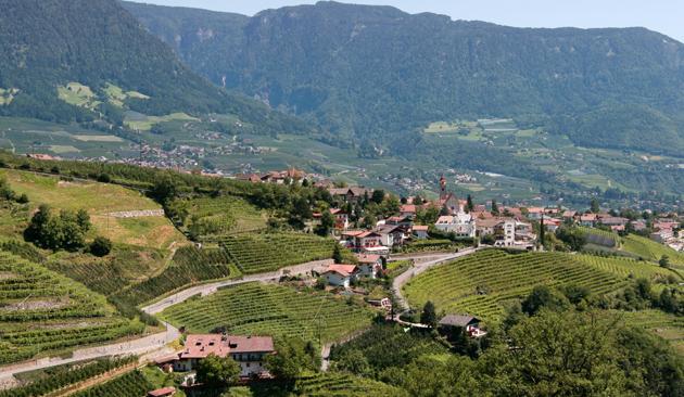 viticoltura Alto Adige