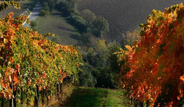 viticoltura Pescara