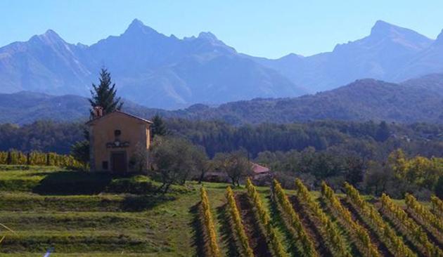 Viticoltura in Lunigiana