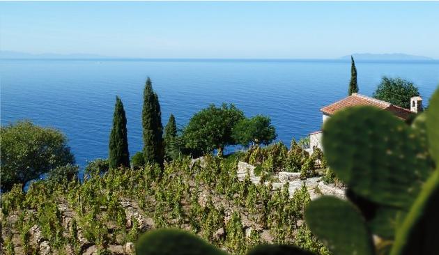 Viticoltura isola d' Elba