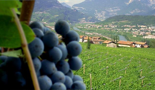vitigno Enantio