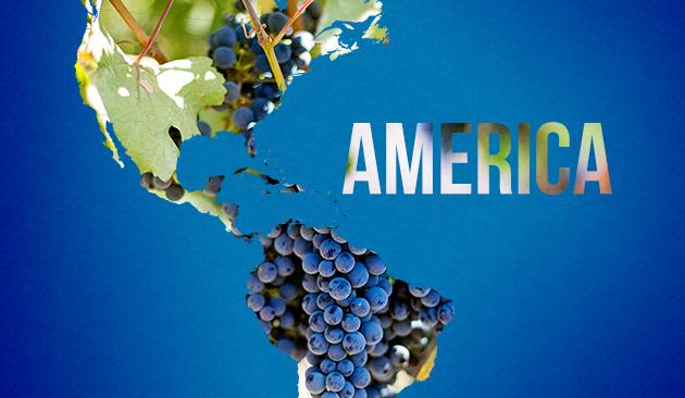 vino in America