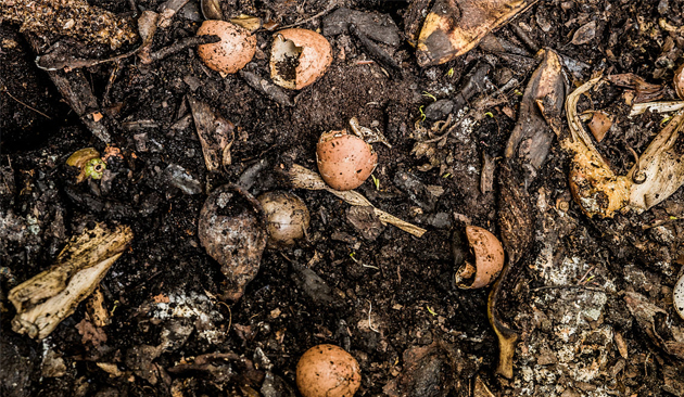 concimi 2 - compost
