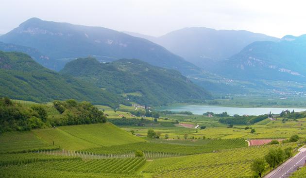 viticoltura in Trentino