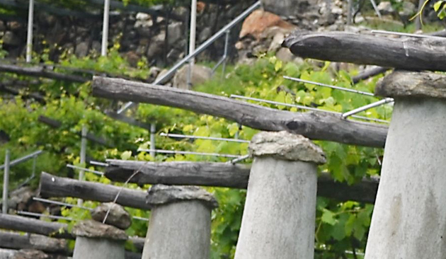viticoltura a Carema