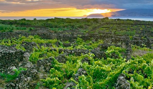 viticoltura delle Azzorre