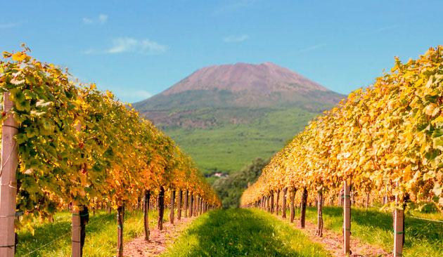 vigne a Pompei