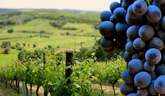 vitigno Touriga Nacional