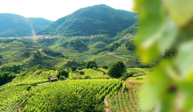 Spumante Trentino DOC metodo classico